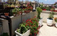 גינת גג – שלבים והמלצות להקמת ותחזוקת הגינה