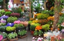 פרחים מהגינה לאגרטל