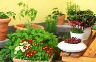 גינון ביתי - כל הכללים לגידול צמחיה בבית
