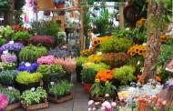 משתלות - הדרך אל הגינה המושלמת
